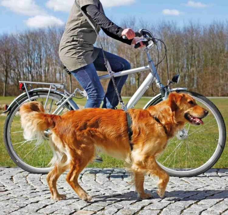 TRIXIE - Fahrrad- und Joggingleine