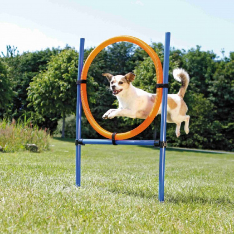 TRIXIE - Agility Ring